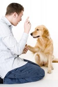 bigstockphoto_Dog_Training_736793