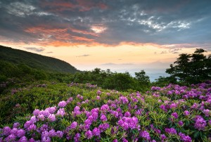 Blue Ridge Parkway Mountains Sunset over Spring Rhododendron Flowers Blooms scenic Appalachians near Asheville NC